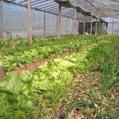 Nuevo evento ,agroecologia en vidriera para el cambio climatico.