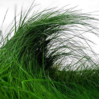 Bless the grass