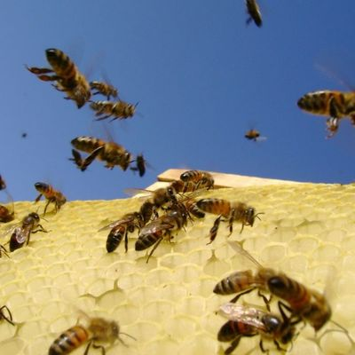 Lucrative beesness:Towards the realization of the full potential of beekeeping in Kenya