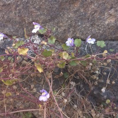 Fleurs sauvages du cimetière