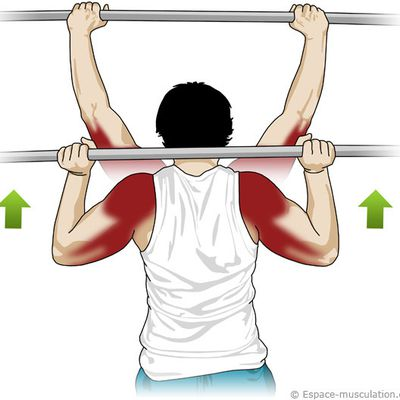 exercices épaules & trapeze (shoulders) fitness & bodybuilding organisé