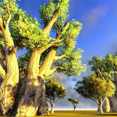 Glad Baobab