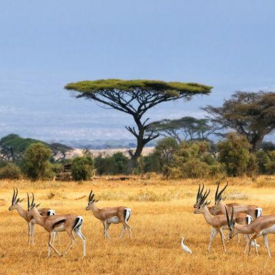 On The South Again.   Carnet de voyage, l'Afrique du Sud.