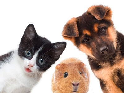Nos animaux.