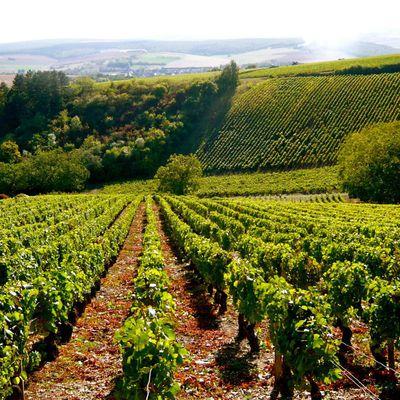 Le vin qui murmurait à l'oreille de l'Homme...