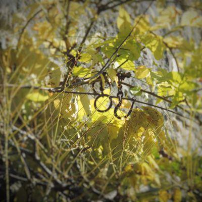 L'automne dévoile ...