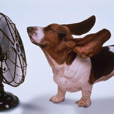 La chaleur chez les animaux