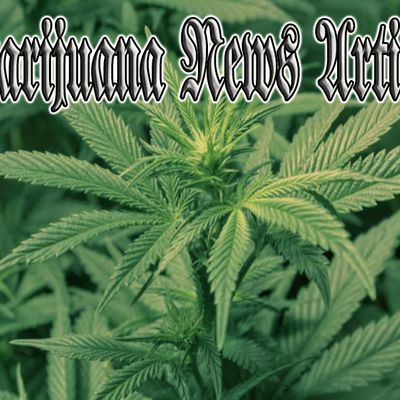 Marijuana News Articles - Cannabis news