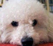 Pensione per cani Castel di Sangro