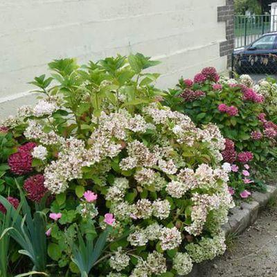jardin mont mirel maromme