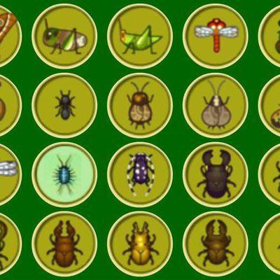 Prix des insectes
