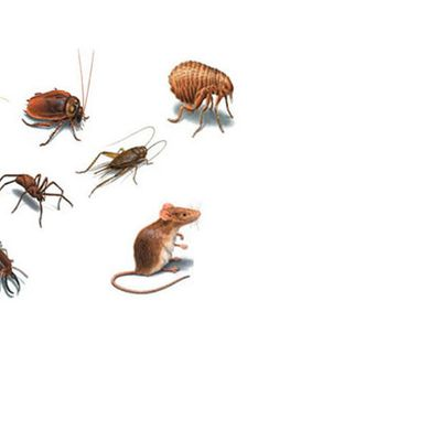 Best pest control in Pune - Result First, Pay Later