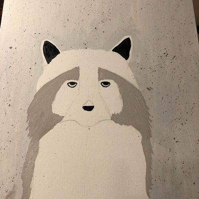 Raccoon-paint night