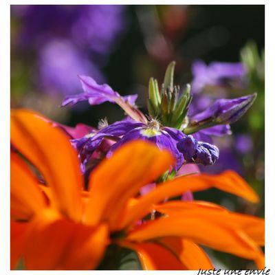 Jouer encore et toujours avec les couleurs du jardin de maman