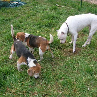 Adopter un deuxième chien?