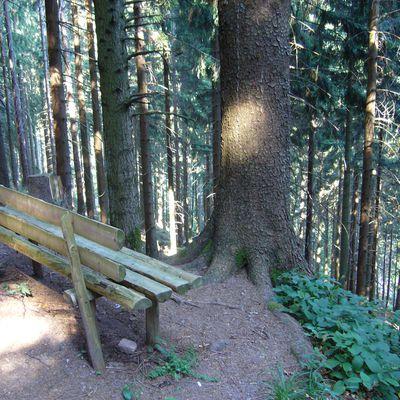 banc et sa vue plongeante sur la Forêt Noire (Allemagne)