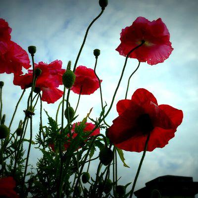 Quelques fleurs pour Jacques