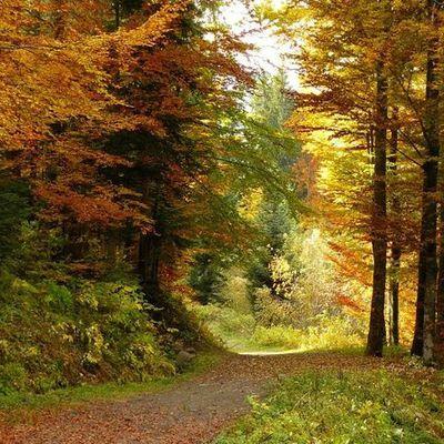 mélancolie d'automne