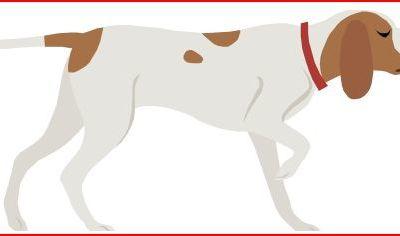 Petite Chasse d'Arreux : Calendrier des jours de chasse