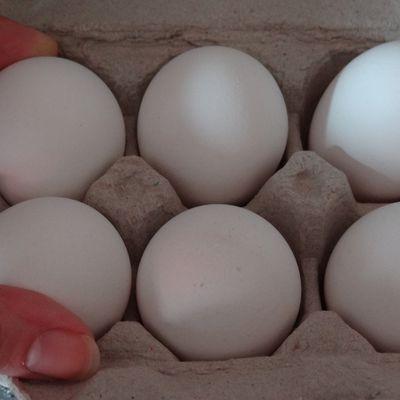 Pourquoi les coquilles d'oeufs sont elles blanches ?