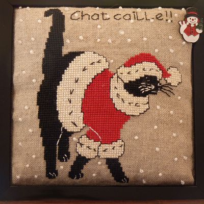 Chat caille...