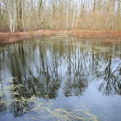 Le petit étang du grand bois, rendez-vous de biodiversité (6)