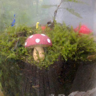 DIY : Un terrarium