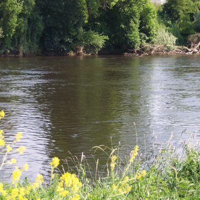 Une rivière nommée la Vienne