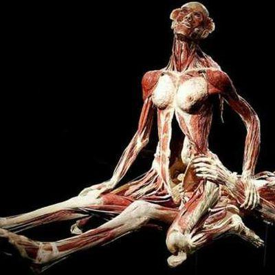 Body Worlds a Milano (tra polemiche e ammirazione)