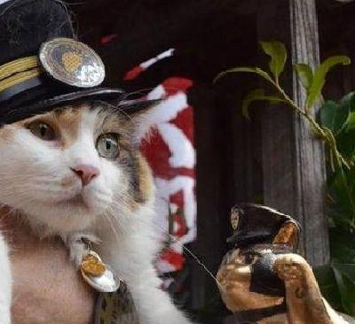 """Gatto, capostazione e divinità shintoista: in Giappone il """"dio"""" felino -"""