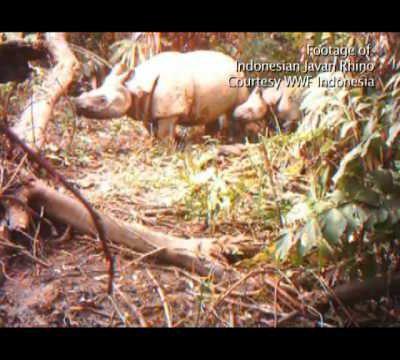 Rinoceronti estinti in Vietnam: il WWF combatte