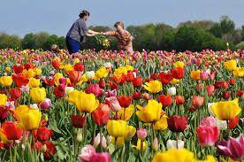 Der Frühling kommt ins Land