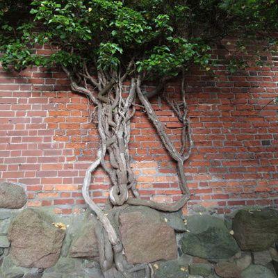 Assèchement des murs : conseils, bons plans, astuces