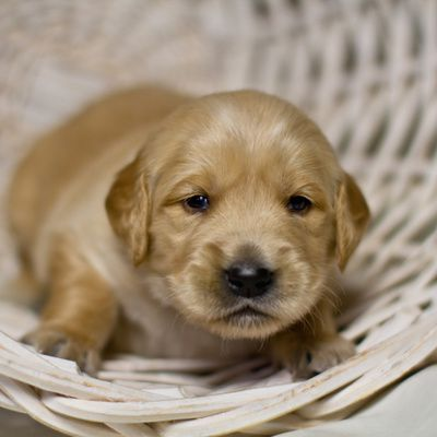 les adresses des sites de photos de chiots sur Internet
