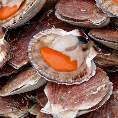 Préparer des noix de Saint-Jacques poêlées (ingrédients, préparation)