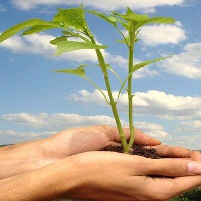 Comment prot ger notre environnement au quotidien - Comment proteger les arbres fruitiers du gel ...