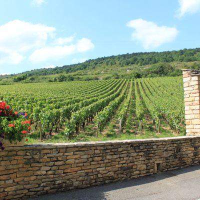 Tout sur les vignobles de Bourgogne