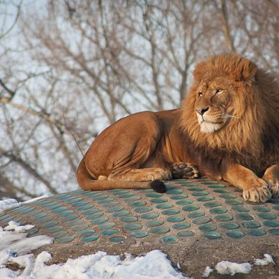 Quelles sont les étapes pour dessiner un lion facilement ?