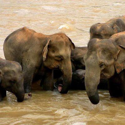 Voyage au Sri Lanka : conseils pour un séjour inoubliable
