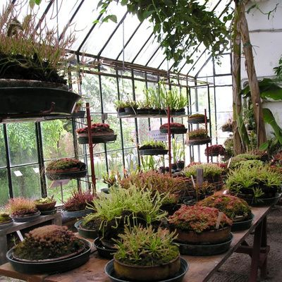 Plantes rares : comment en faire la collection ?
