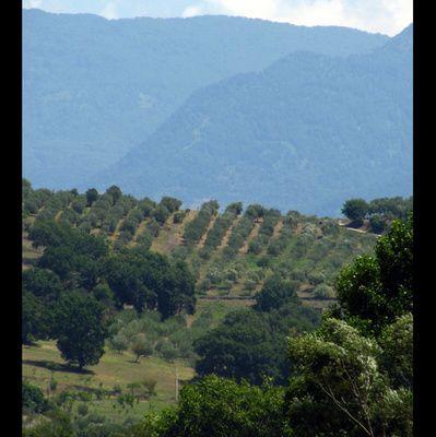 Piano di Sviluppo Rurale in Italia, la capacità di spesa dei fondi comunitari