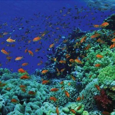 Plongée en mer Rouge : quels sont les meilleurs endroits pour faire de la plongée en mer Rouge ?