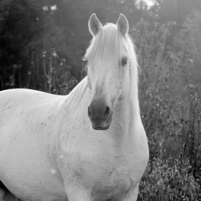 Le cheval et l'homme : toute une histoire