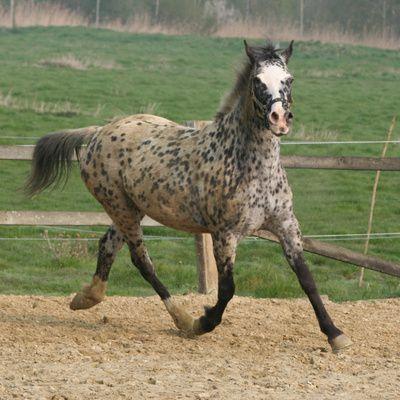 ¿Dónde se publican anuncios de venta de caballos?