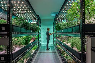 Global Vertical Farming Market Is size Predicted to reach USD 8.8 Billion by 2024