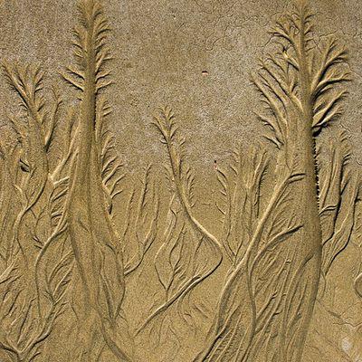 Caresse de la marée sur le sable