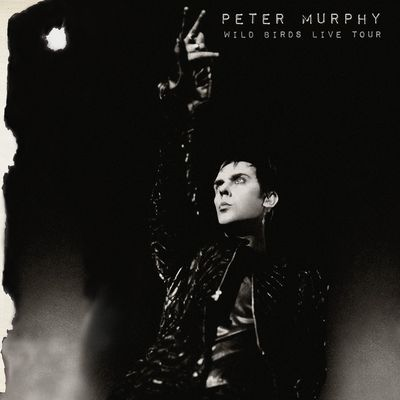 #NowPlaying Peter Murphy – Wild Birds Live Tour...