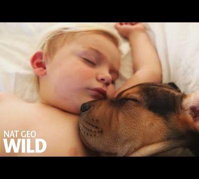 L'amour d'un petit chien pour un enfant