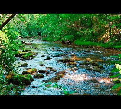 Le Silence.. de la Nature