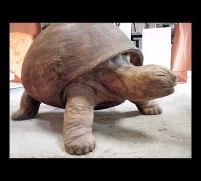 TORTUE EN SEQUOIA